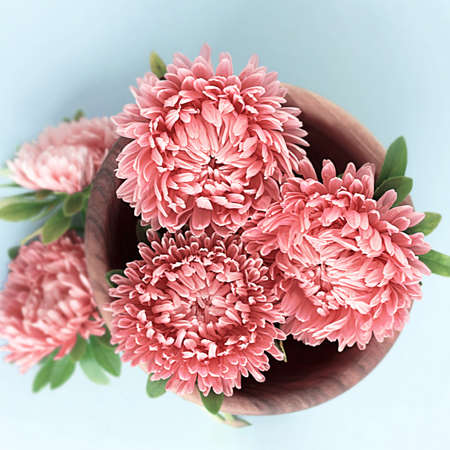 Soft pink fresh aster flowers gathered in wooden bowl for table decoration. Blue background. Square format. Top view.