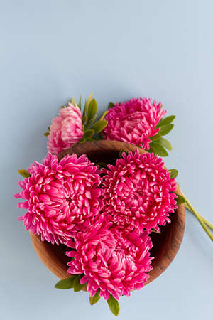 Pink aster flowers gathered in wooden bowl on blue background. Copy space.