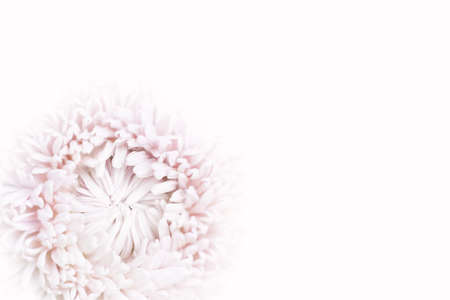 Background in soft and blurred style. Sprind, Mothers Day, Womens Day and wedding concept. Selective focus.