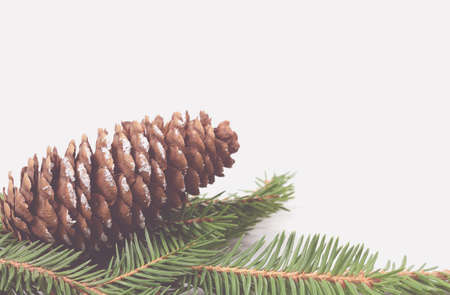 Christmas fir cone with branch. Soft toning.