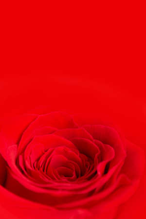 Passionate Red Background For Text Of The Same Color With Rose Stock Photo Picture And Royalty Free Image 139086835
