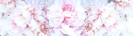 Amazing banner with blooming soft pink peonies flowers. Wedding floristic background. Zdjęcie Seryjne