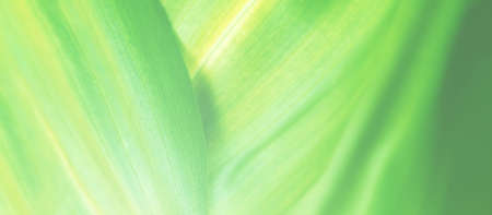 Amazing eco life nature background banner. Macro green leaf texture . Selective focus. Ecology green fresh eco friendly backdrop. Beauty in simple things. Soft toning.