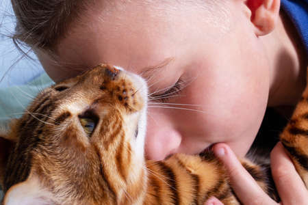 Relationship between boy and cat. Close-up.