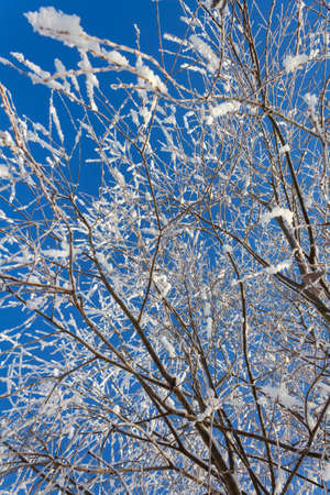 Amazing winter landscape. Branches covered in snow.