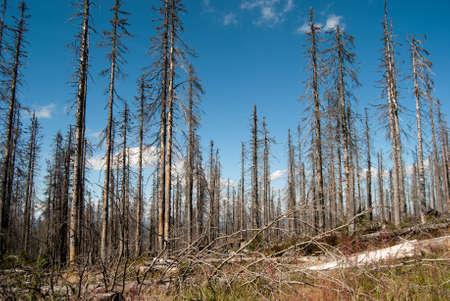 environmental damage: Dead forest in Plöckenstein, Germany
