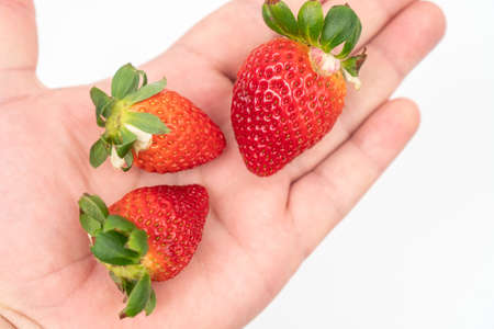 Fresh strawberries in the hand isolated above white background.