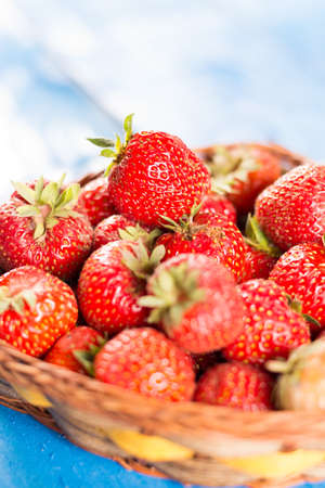 Fresh dirty just picked strawberries in the basket above blue wooden background