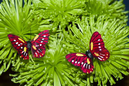 Two small red butterfly on the bunch of green flowers. photo
