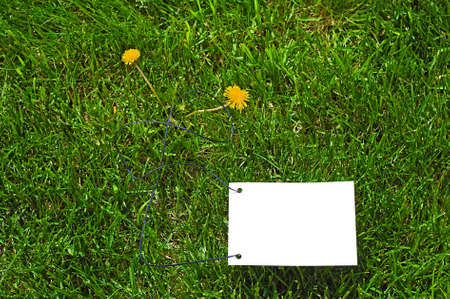 unoccupied: Clear white paper on green grass for text writing. Two yellow flowers there.