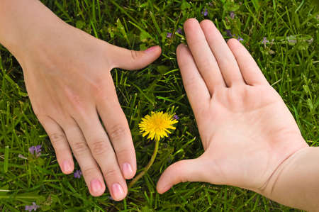 Frame from human hands with flower in the middle of it. Green grass is background photo
