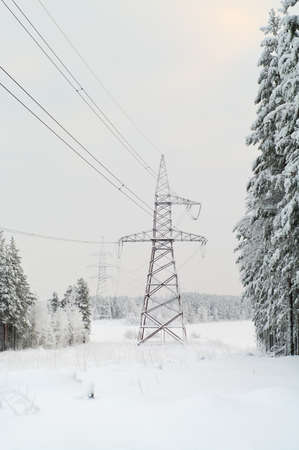 High-voltage electric lines laid on the snowy evergreen northern woods in Russia photo