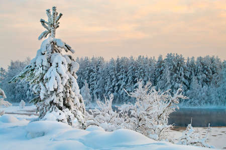 Fir tree in winter forests of Karelia, Russia. Black water and snowy brunches photo