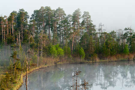 Morning in taiga forest. Fog on the surface of water. Tranquil lake. photo