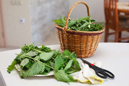 Fresh gathered nettles in a wicker basket on the table in the kitchen photo