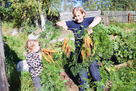 kids holding hands: Mature woman in garden with small kid picking the carrot