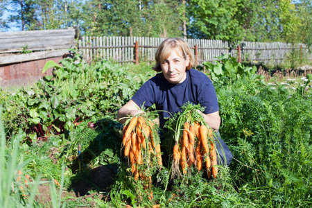 Mature woman in garden holding bunch of carrot photo