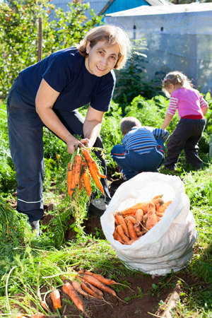 harvesting: Mature woman in garden with children picking the carrot