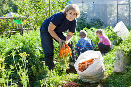 Mature woman in garden with small children picking the carrot 免版税图像
