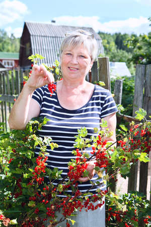 red currants: Mature adult woman in own garden with brunch of red currants berries