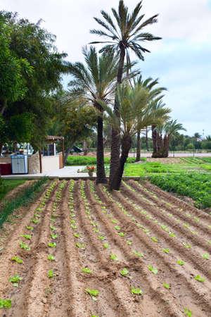 granger: MONASTIR, TUNISIA - CIRCA MAY 2012: Cultivated garden in hotel territory on circa May, 2012 in Monastir, Tunisia Editorial