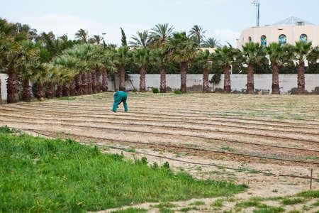 MONASTIR, TUNISIA - CIRCA MAY 2012: Cultivated garden and earth worker in hotel territory on circa May, 2012 in Monastir, Tunisia Stock Photo - 16266760