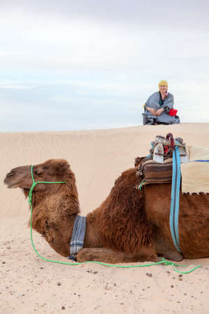 extreme heat: Caucasian woman sitting on sand dune in desert with camel on foreground