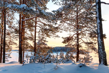 Sunset on frozen winter lake through snow-covered pines photo