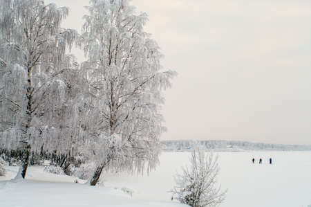Snow covered white birches and people on lake ice in winter season photo