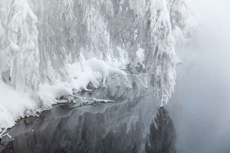 wintery day: Snow-swinging branch above water in winter season