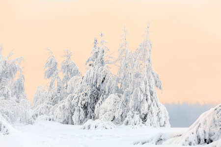 Smoke from opening lake and snowy pines on shore, Stock Photo - 17364137