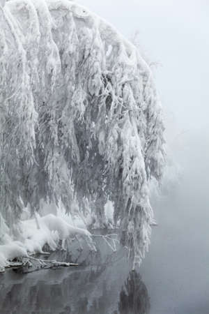 Tree branches bent under the weight of snow over the smooth surface of water. Winter season in Karelia, Russia photo