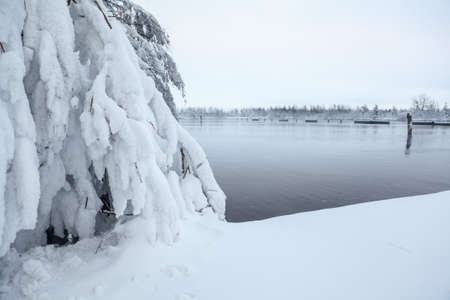Evergreen snow-covered trees on lake shore at winter season photo