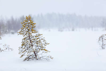 Lonely evergreen tree under strong blizzard on white snowy field photo
