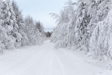 wintery day: Wintry road and snow-covered branches of trees in winter