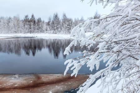 paisaje naturaleza: Ramas blancas del �rbol en la orilla del lago de invierno cubierto de nieve Foto de archivo