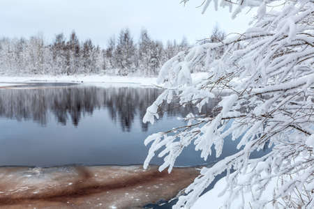 frozen lake: Snow-covered white branches of tree on winter lake shore Stock Photo