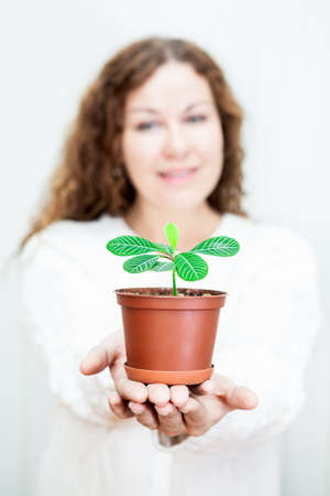 Small green plant on stretched female hands on white background photo
