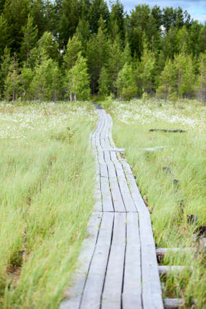 evergreen forest: Wooden pathway between swamp to evergreen forest