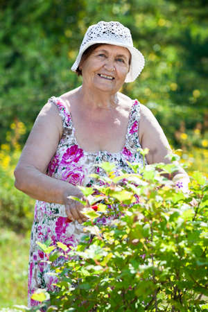 agricultural life: Portrait of pension age woman when gardening Stock Photo