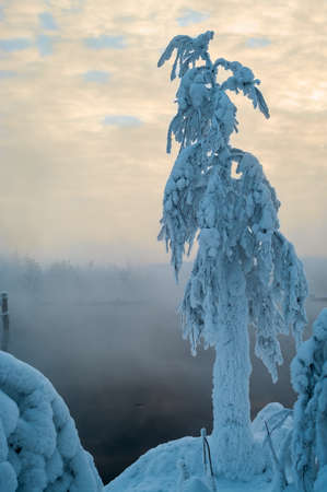warm water: Snow-covered branch on shore of unfrozen lake with vapors from warm water, Karelia, Russia Stock Photo