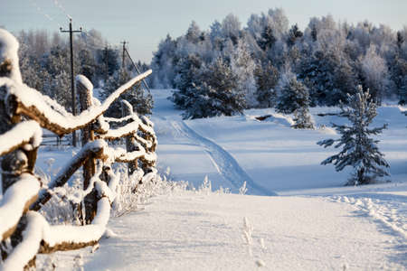 evergreen forest: Winter country landscape with timber fence and snowy road into evergreen forest