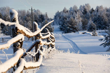 Wooden fence and snowy road into evergreen forest at winter season photo