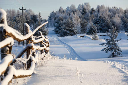Wooden fence and snowy road into evergreen forest at winter photo