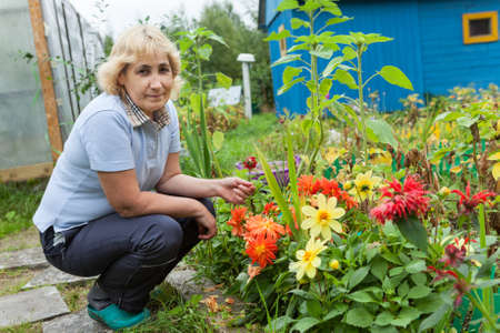 backyard woman: Mature woman cultivating beauty flowers in the flowerbed on house backyard