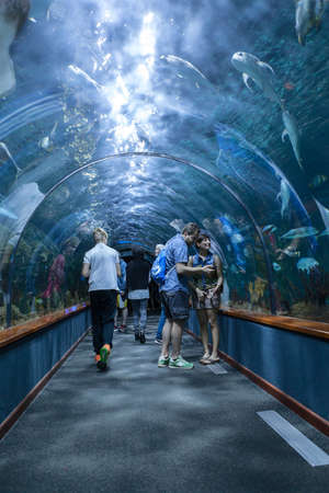 aquarium visit: PUERTO DE LA CRUZ, TENERIFE, SPAIN-CIRCA 2016, JAN: The Loro Parque Aquarium with underwater tunnel. The Loro Parque is one of the best zoos in Europe. Editorial