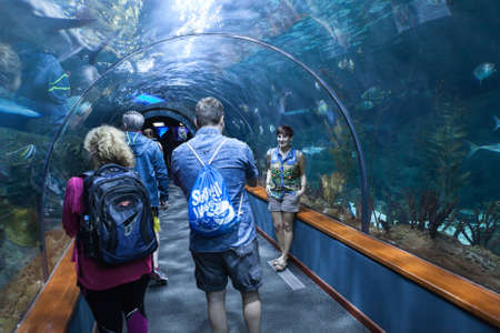 aquarium visit: PUERTO DE LA CRUZ, TENERIFE, SPAIN-CIRCA 2016, JAN: Visitors watch sharks and color fishes in underwater glass tunnel of the Loro Parque Aquarium. Loro Parque is the best zoo in Europe.