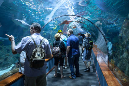 aquarium visit: PUERTO DE LA CRUZ, TENERIFE, SPAIN-CIRCA 2016, JAN: People watch sharks and color fishes in underwater tunnel of the Loro Parque Aquarium. Loro Parque is the best zoo in Europe Editorial