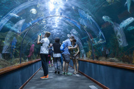 aquarium visit: PUERTO DE LA CRUZ, TENERIFE, SPAIN-CIRCA 2016, JAN: Visitors watch sharks and color fishes in underwater tunnel of the Loro Parque Aquarium. Loro Parque is the best zoo in Europe.