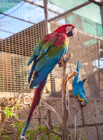 Open cage with large red and with blue wings parrots, Tenerife, Spain